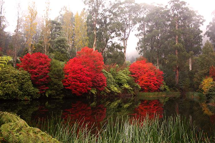 Dandenong Ranges Botanic Gardens