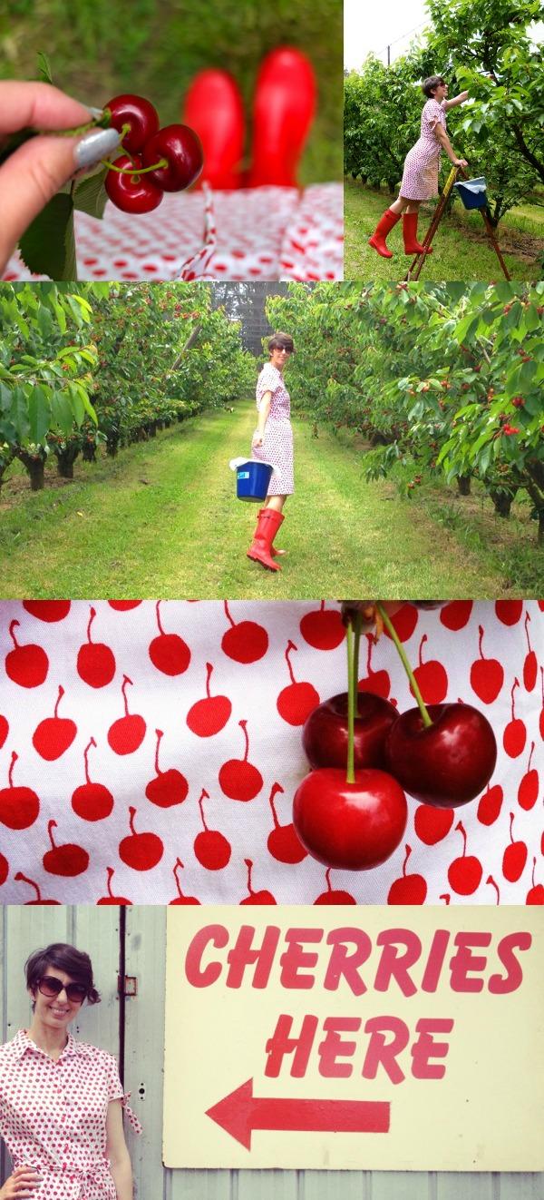 Cherry farm Cherries red green