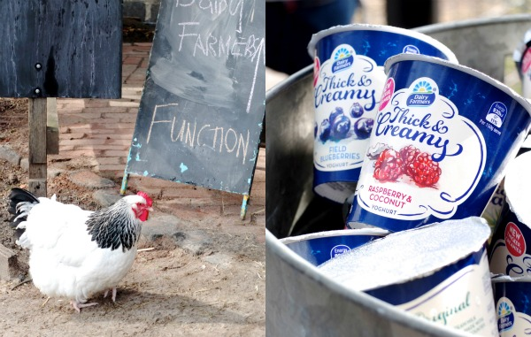 Dairy farmers thick and creamy yoghurt
