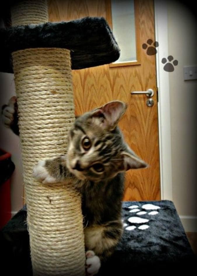 cat cuddler3
