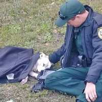 Photo of police officer comforting a dog that was hit by car goes viral