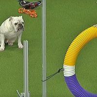 Chunky bulldog steals hearts at dog show with agility performance