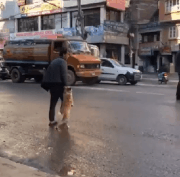 Smart dog stands on his hind legs and reaches for owner's hand to cross the street.