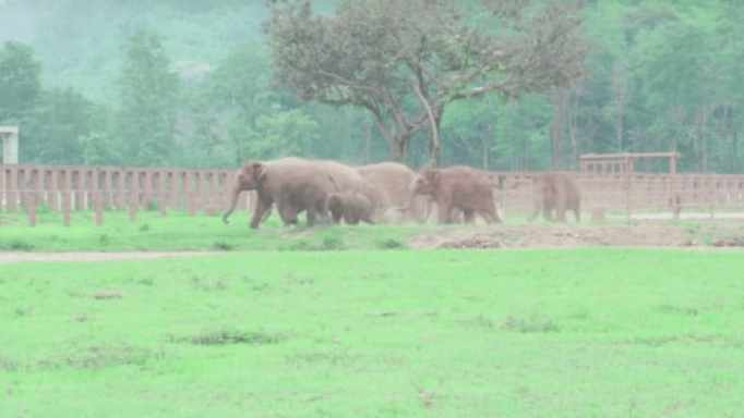 This elephant sanctuary is located in Thailand