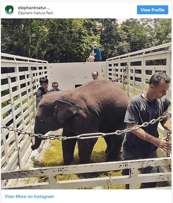 Caretakers working at the elephant sanctuary