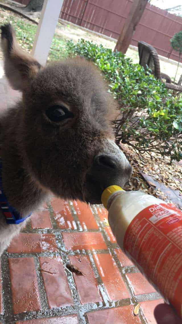 Jack nursing from a bottle