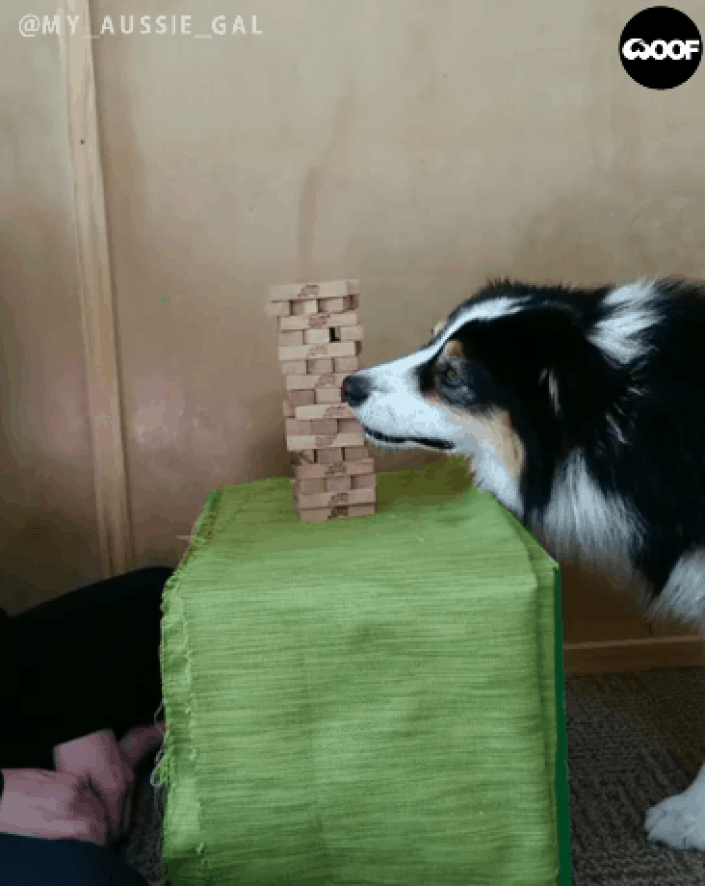 talented dog