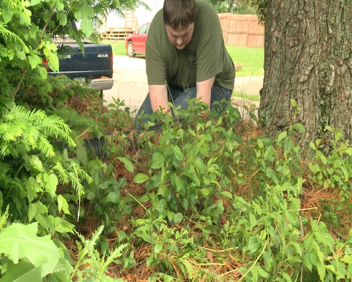 Students do yard work for the elderly to earn Physical Education credits