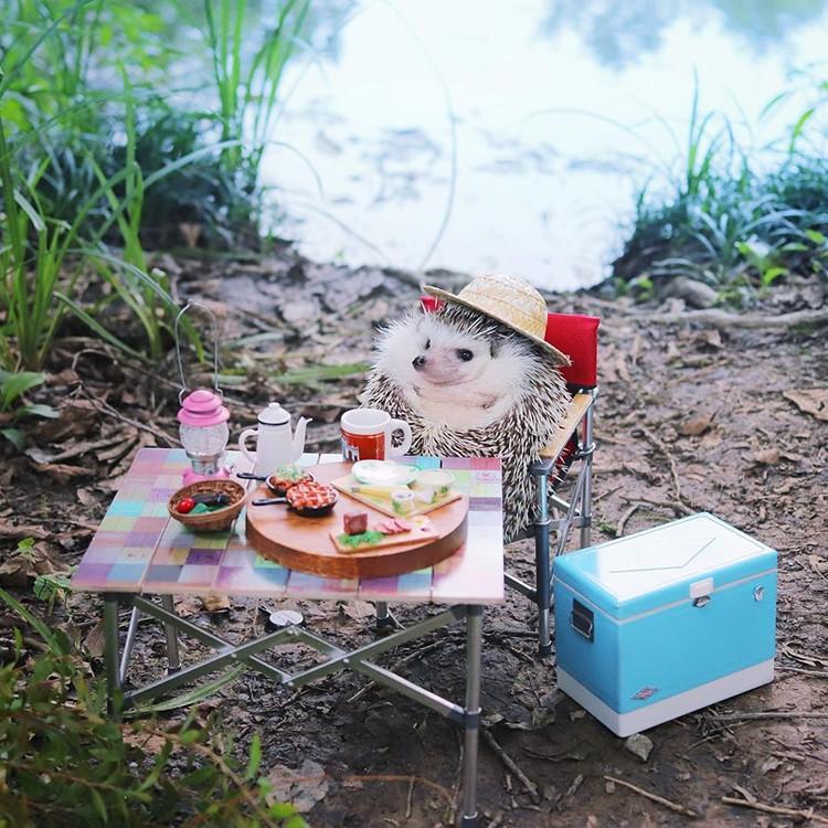 azuki-camping-hedgehog-3
