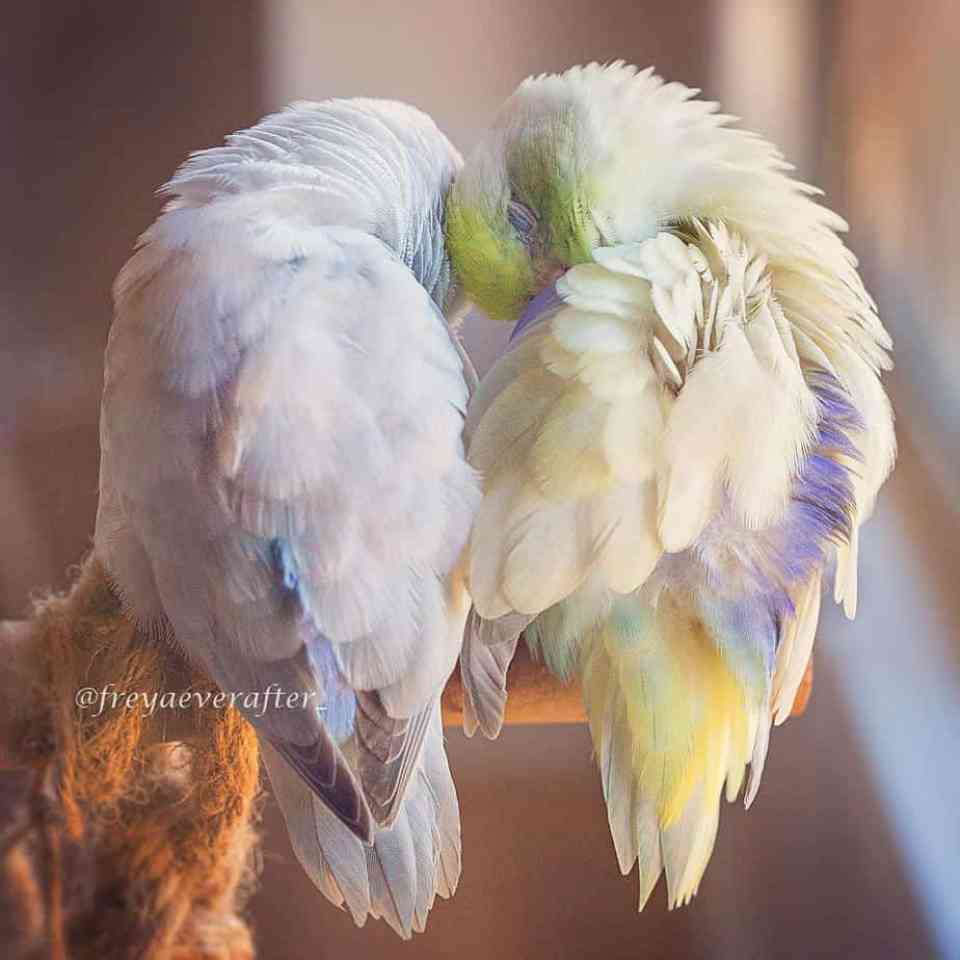 bird-photography-rupa-sutton-5