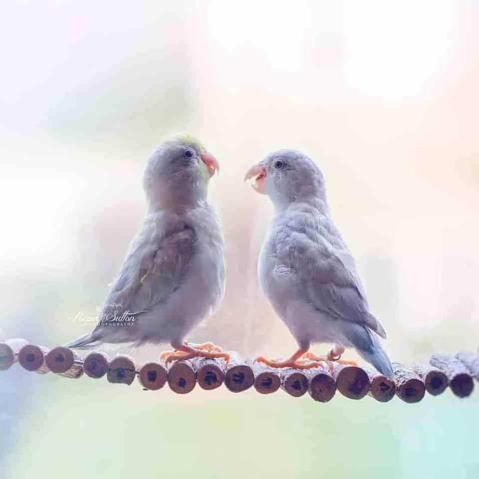 bird-photography-rupa-sutton-9