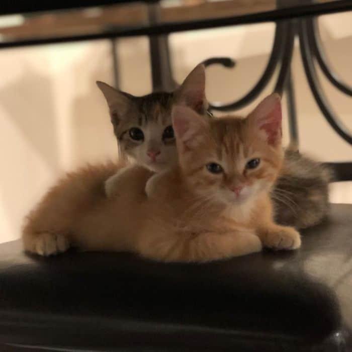 office-kittens-debit-credit-ohio-1-5d1c5189e6513__700