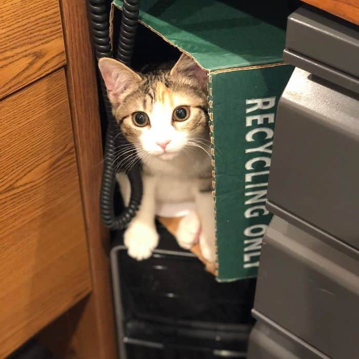 office-kittens-debit-credit-ohio-14-5d1c51a2b405f__700