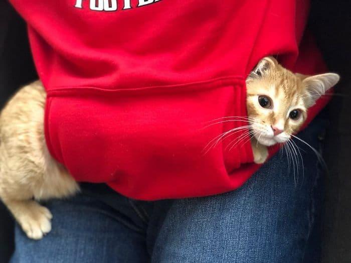 office-kittens-debit-credit-ohio-8-5d1c51989936f__700