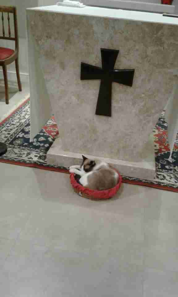 cat stays in a church
