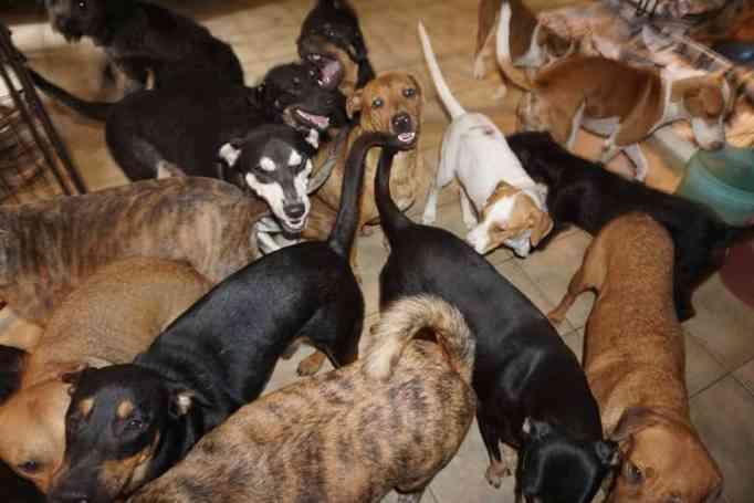 woman helps dogs during hurricane season