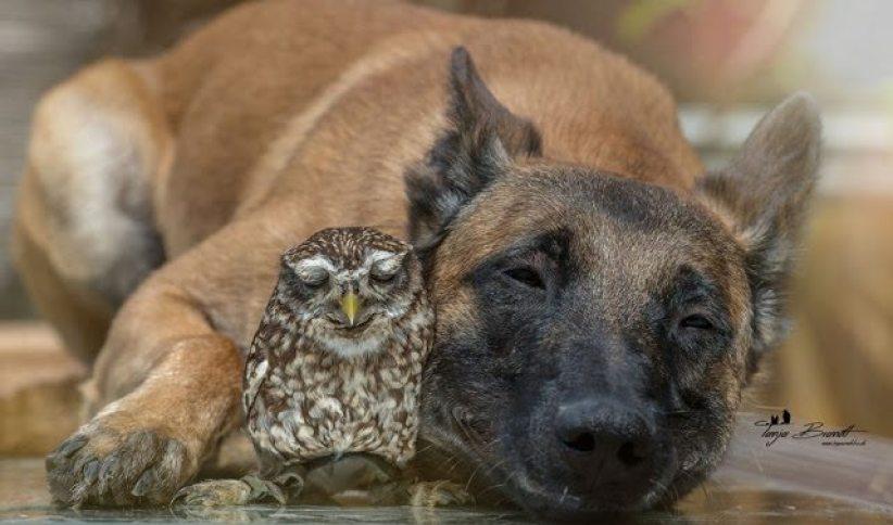 animal bonding