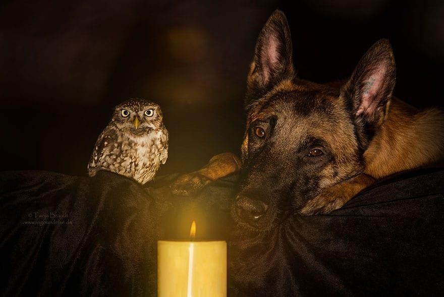 animal photographer