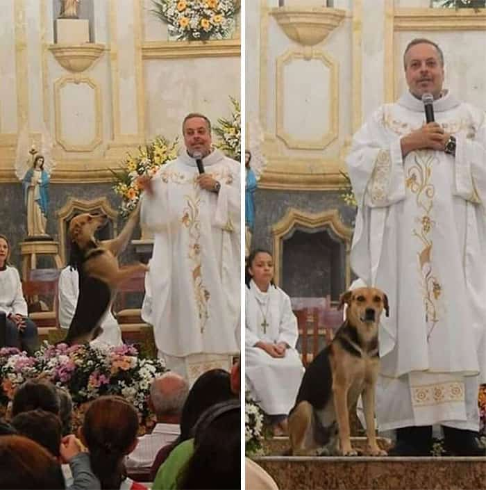 Homeless dogs welcome inside church.