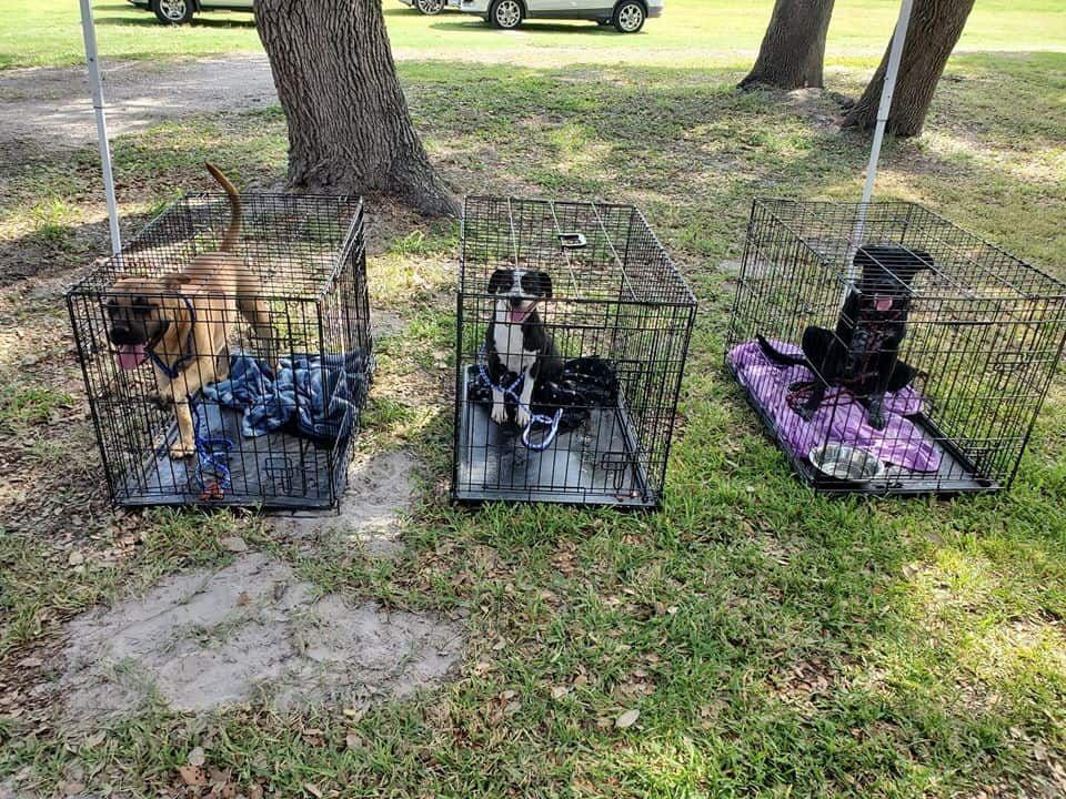 Dogs are out from the shelter
