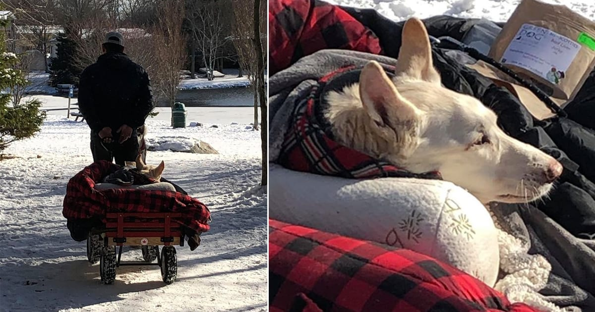 This man crafted a cozy wagon so his paralyzed dog can 'walk' with him - my positive outlooks