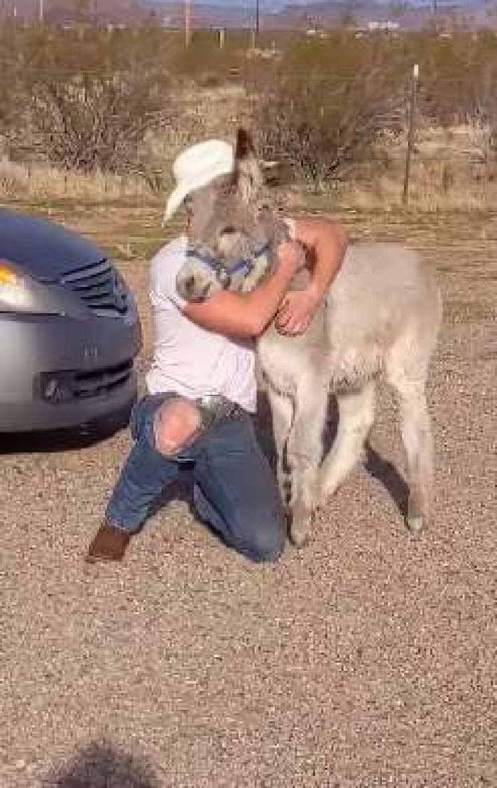 Sweet home with a donkey.