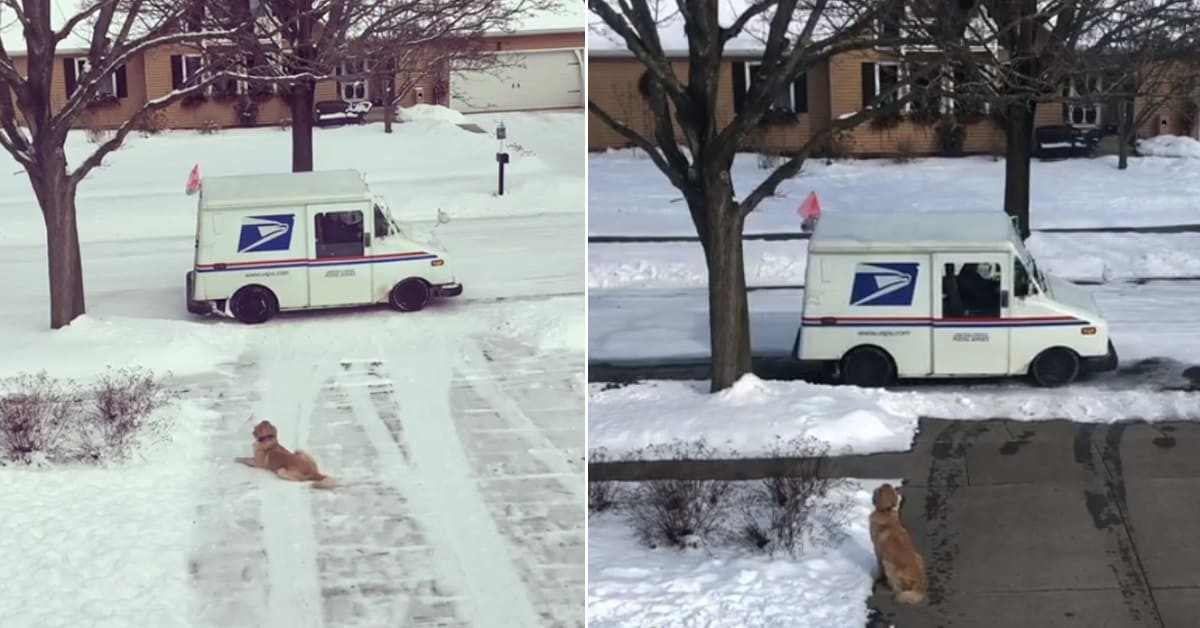 Adorable dog waits for his favorite mailman every day to give him sweet hugs - my positive outlooks