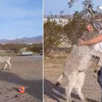 Meet Walter, the donkey who behaves like a dog whenever his dad comes home