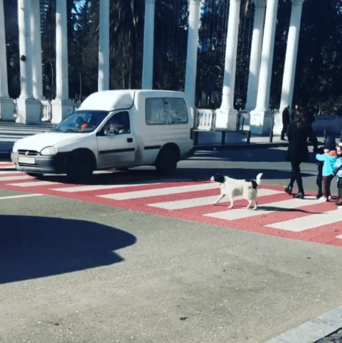 Dog becomes a hero to many pedestrians.