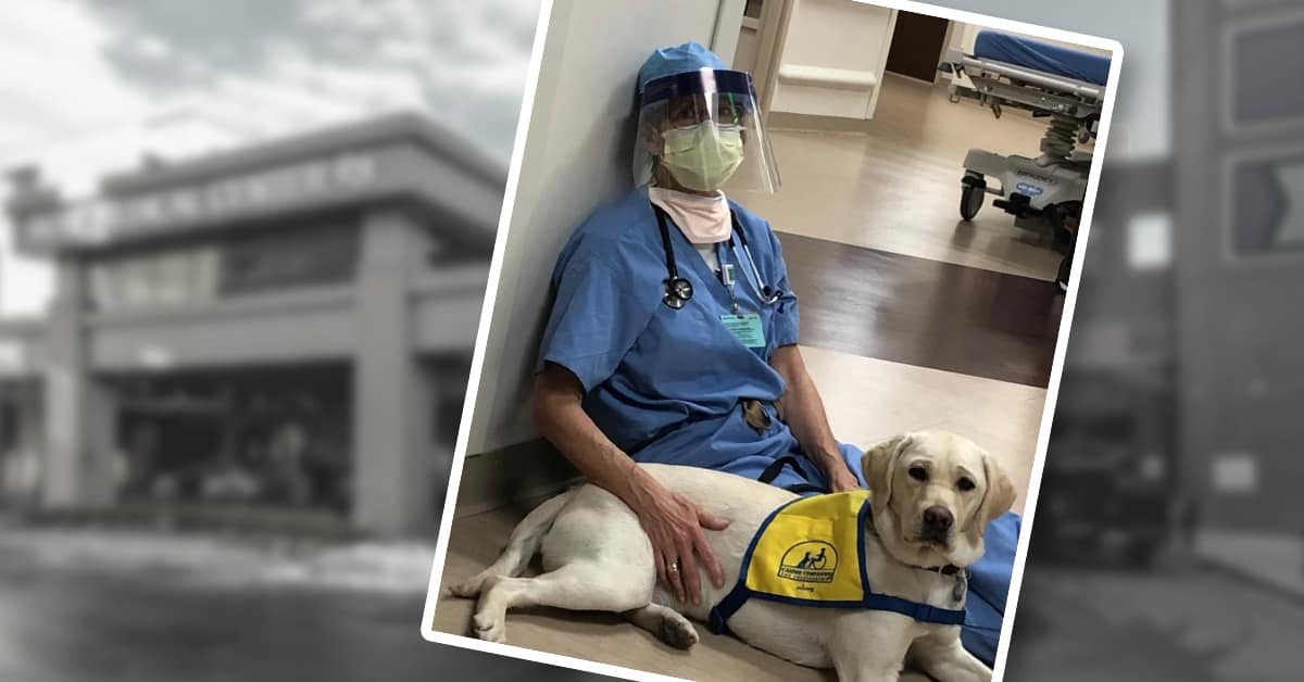 Service dog brings comfort and joy to medical workers at Rose Medical Center in Denver - my positive outlooks