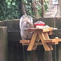 Man builds a cute mini picnic table where squirrels in his yard can hang out and eat
