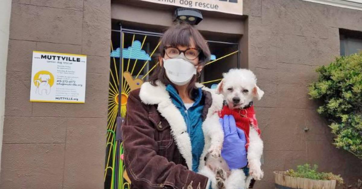 Como esse herói está fazendo adoções de cães idosos acontecerem durante o distanciamento social da pandemia 6