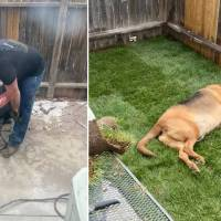 Rescue dog gets his own yard - thanks to his mom's boyfriend who built one just for him