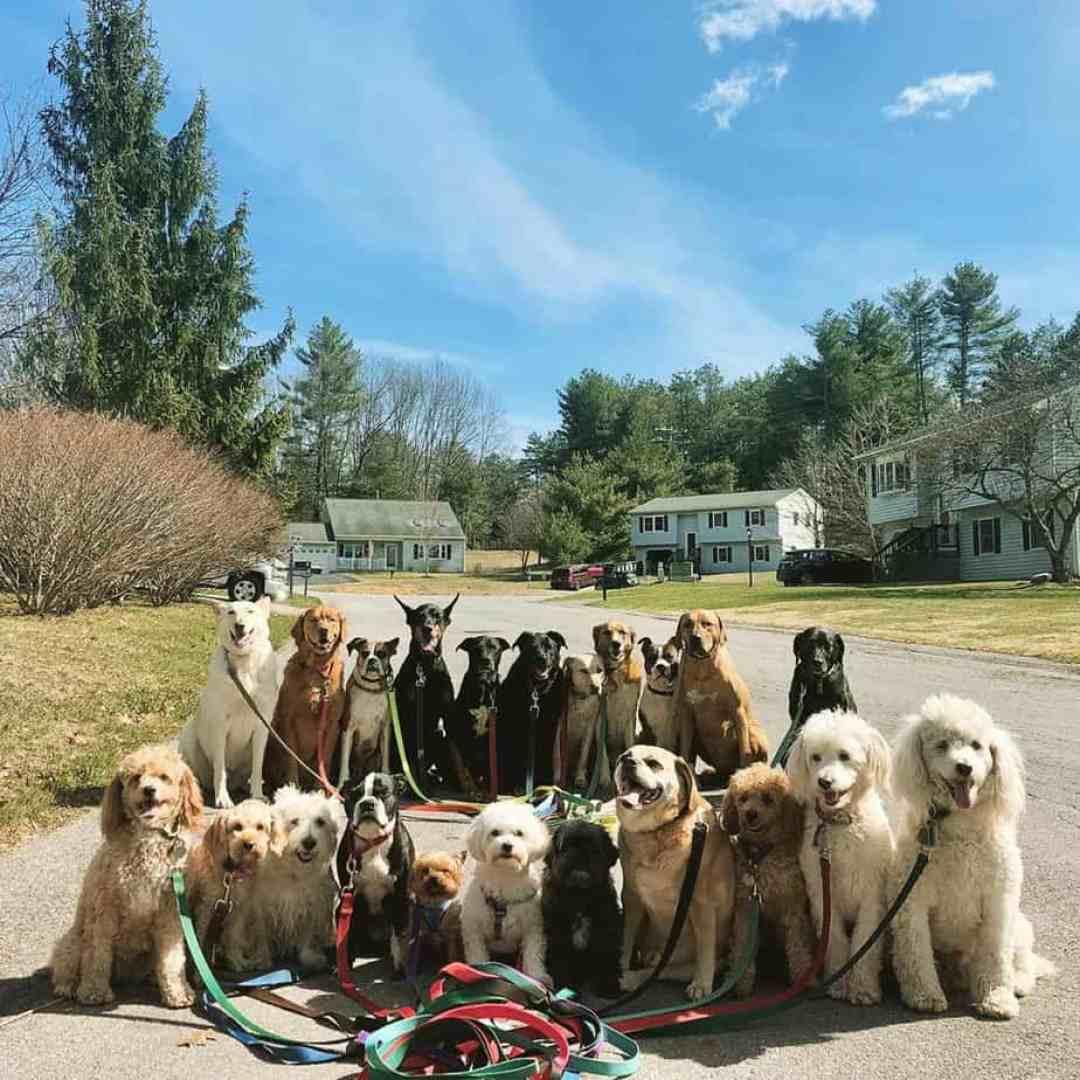 Passeador de cães tira todos os dias retratos adoráveis do estilo peludo de classe 17