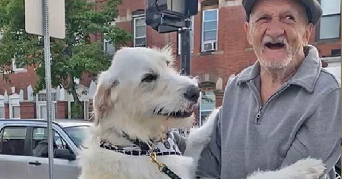 Cão enlouquece quando se reúne com o vizinho idoso favorito depois de semanas separados 11