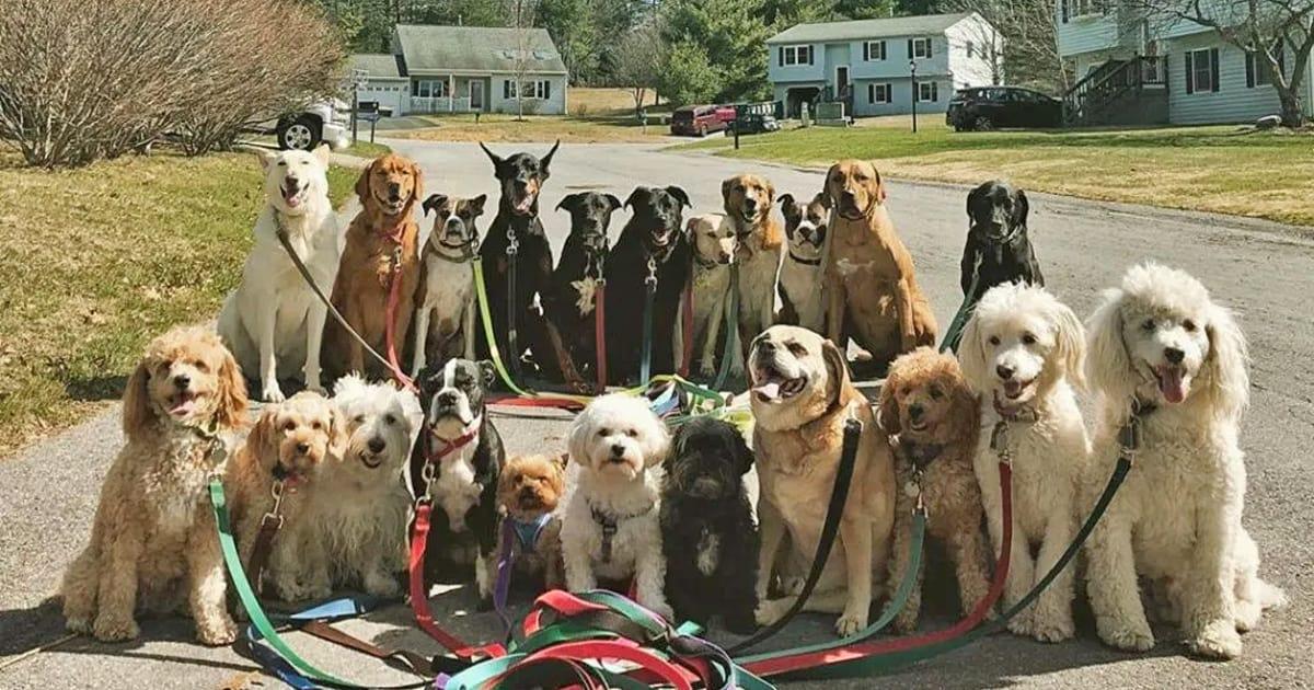 Passeador de cães tira todos os dias retratos adoráveis do estilo peludo de classe 5