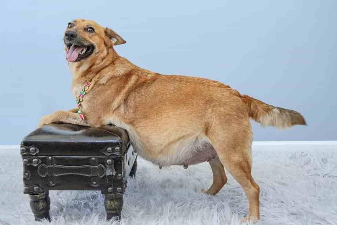 Esta sessão de maternidade de cães organizada por uma organização sem fins lucrativos.