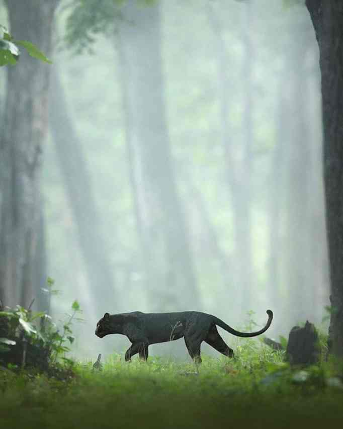 wildlife photos by shaaz jung