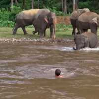 Baby elephant came to rescue her favorite human who she thought was drowning in a river