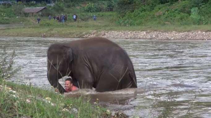 Little hero at the elephant sanctuary.