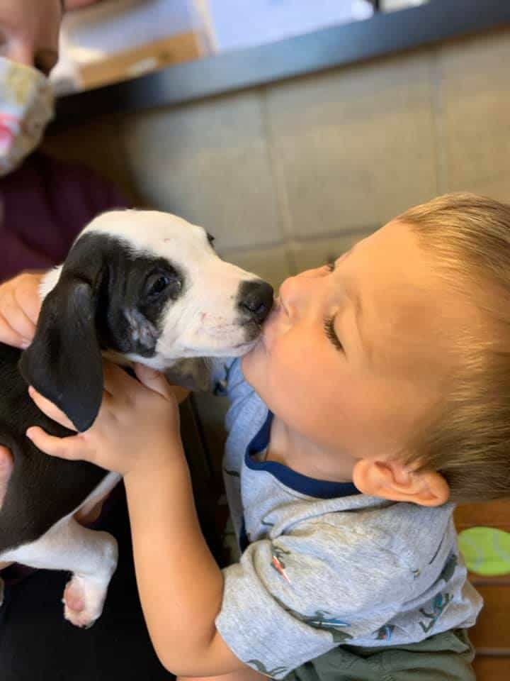 Bentley Boyers kissing Lacey the puppy