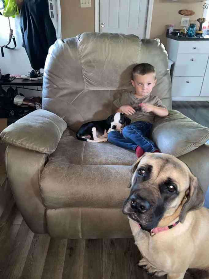 Bentley Boyers sitting on a couch with Lacey and Remi the English Mastiff sitting on the floor