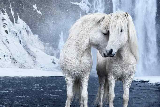 Photographers visit this beautiful country to take photos of its aurora borealis in Iceland, Doggett took photos of its unique horses.