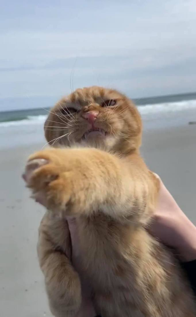 Pumpkin the cat who hates the wind