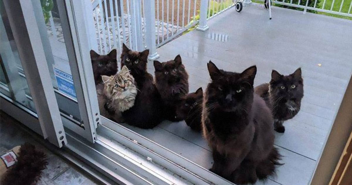 Stray cat introduced all her six babies to woman who helped her - my positive outlooks