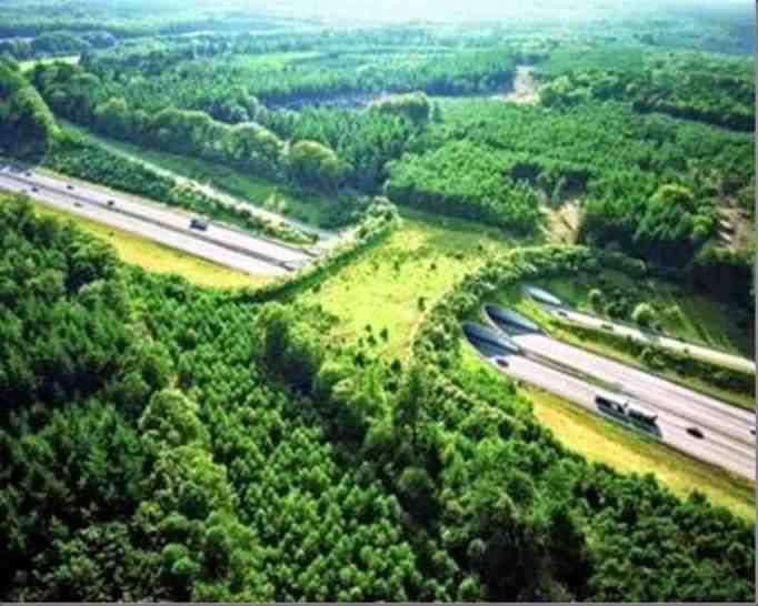 Natuurbrug Zanderij Crailoo