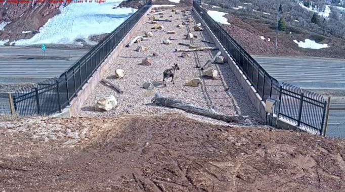 Parleys Canyon wildlife overpass
