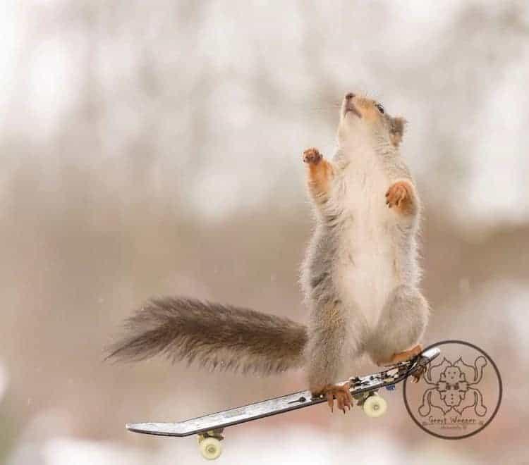 Squirrel riding a skateboard