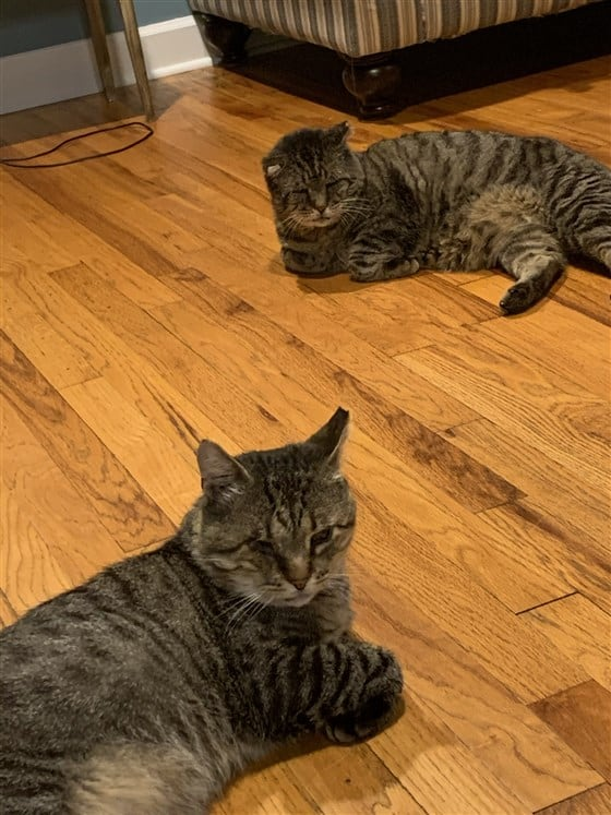 Two tabby cats lying on a wooden floor