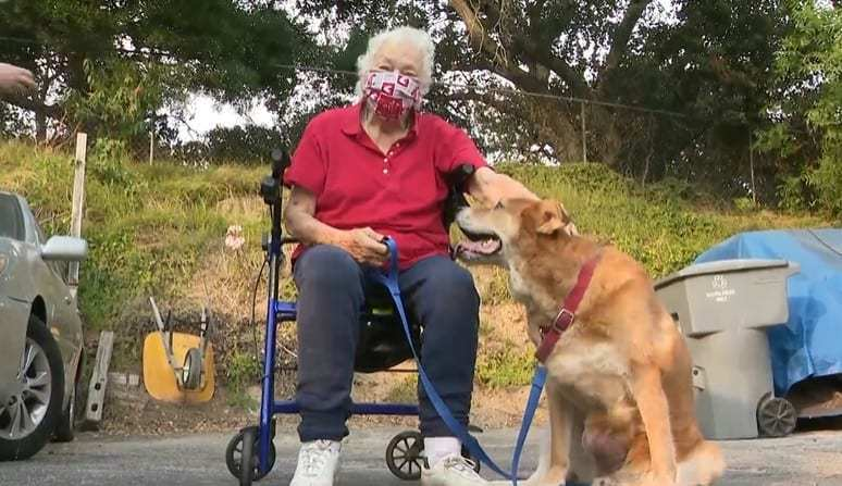 An elderly woman on a wheelchair and her dog